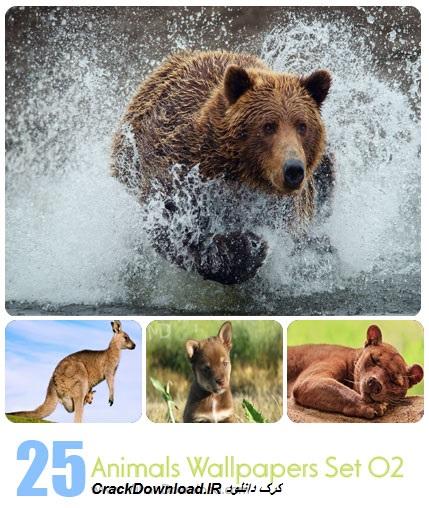 دانلود مجموعه عکس حيوانات: Animals Wallpapers Set 02
